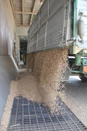 Abladen von Weizen